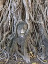 Stone face in the wood ancient wat mahathat Royalty Free Stock Photos