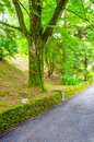 Stone fence beside the road with passes tree Royalty Free Stock Photo