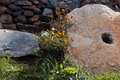 Stone garden decoration of plant in Stock Photo