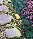 Stone Gravel Foot Path on Zen Garden with Mondo Grass and Ornamental Flame Violet Plant. Royalty Free Stock Photo