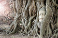 Stone head of Buddha in the root tree Royalty Free Stock Photo