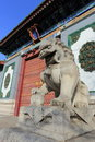 The  stone lion of china Stock Image
