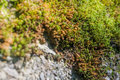 Stone moss on a rock Royalty Free Stock Photo