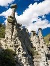 Stone mushrooms Stock Photos
