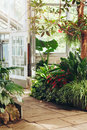 Stone path in botanical garden greenhouse with many green trees, plants and colorful flowers Royalty Free Stock Photo