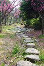 Stone path with plum blossom Stock Images