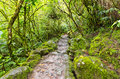 Stone path rainforest ecuador Royalty Free Stock Photo