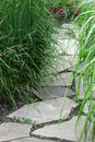 Stone path in the summer garden with decorative grass Royalty Free Stock Images