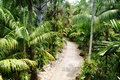 Stone pathway in tropical garden during day time Royalty Free Stock Image