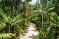 Stone pathway in tropical garden during day time Royalty Free Stock Photos