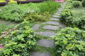 The stone paved pathway in the garden Royalty Free Stock Photo