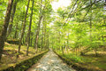 Stone paved road in forest happy valley karuizawa nagano japan Royalty Free Stock Images