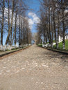 Stone pavement kamennaya avenue with trees in the spring in the city Royalty Free Stock Images