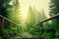 Stone road in a coniferous forest in the mountains Stock Photo