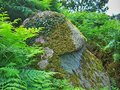 Stone a special near hammershus in bornholm denmark Royalty Free Stock Photography