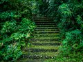 Stone staircase in the forest Royalty Free Stock Photo