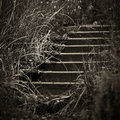 Stone staircase step going up surrounded by grass monochrome Stock Images