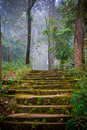 Stone stairs in the forest Royalty Free Stock Photo