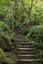 Stone stairs in a lush and verdant forest long flight of stony full of trees vegetation Stock Photos