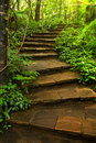 Stone stairway to deep forest close up Stock Photos