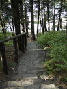 Stone staris stairway leads down to a quite lake Royalty Free Stock Photography