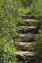 Stone Steps in Foliage Stock Photography