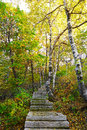 The stone steps and silver birch of zu mountain photo taken in china s hebei province qinhuangdao city scenic spot time is october Stock Image