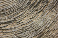 Stone texture lines concentric rings intagliated on the surface natural textured background Royalty Free Stock Image