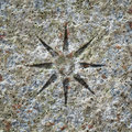 Stone texture with a star Royalty Free Stock Photos
