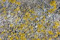 Stone texture with yellow moss. Abstract background closeup. Stock image.