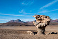 Stone Tree, Bolivia Royalty Free Stock Photography