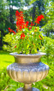 Stone vase of red flowers Royalty Free Stock Photos