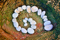 Stone volute spiral of pebbles on the sea boulder Royalty Free Stock Images