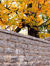Stone wall autumn leaves Royalty Free Stock Photos