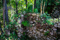 Stone Wall Covered With Plants...