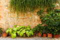 Stone wall with flowers and ivy. Old Italian house background, vintage Italy