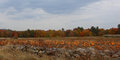 Stone Wall And Pumpkin Crop In...