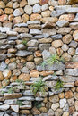 Stone wall with some plants in garden Stock Photography