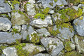 Stone wall texture green moss Stock Images