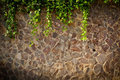 Stone wall texture with vines Royalty Free Stock Photography
