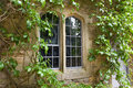 Stone window with climbing plants gothic style overgrown Stock Photography