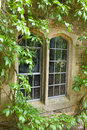 Stone window with climbing plants gothic style overgrown Royalty Free Stock Photo