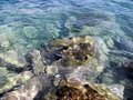 Stones with algaes in the sea water Royalty Free Stock Photo