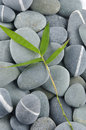 Stones and bamboo-leave Royalty Free Stock Photos
