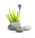 Stones with grass and flower isolated on white background Royalty Free Stock Photos
