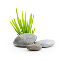 Stones with grass isolated on white background Stock Photography