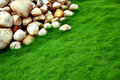 Stones green grass Royalty Free Stock Photo