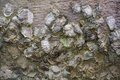 Stones and mud, background Royalty Free Stock Photo