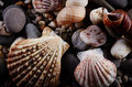 Stones and seashells nature background Royalty Free Stock Images