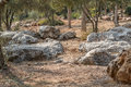 Stones and trees in the Valley of the Cross Royalty Free Stock Photo
